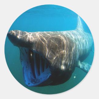 Basking shark round sticker