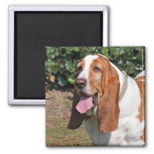 Basset hound dog magnet, present idea