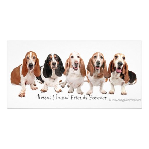 Basset Hound Friends Forever Personalized Photo Card