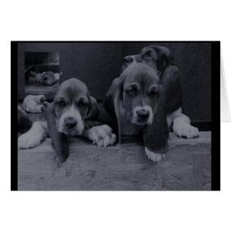 Basset hound greeting card