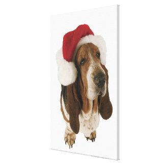 Basset hound in Santa hat Canvas Print