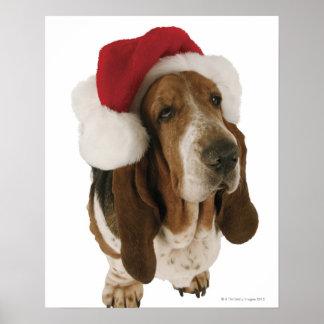 Basset hound in Santa hat Poster