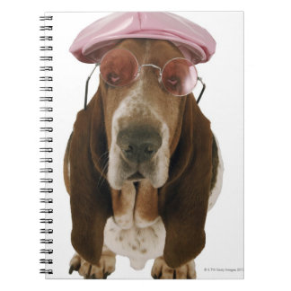 Basset hound in sunglasses and cap notebooks