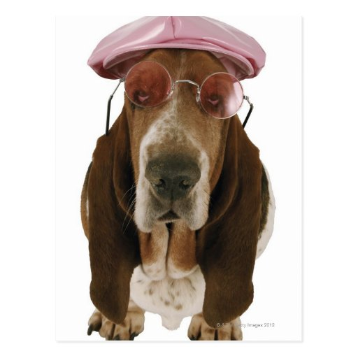 Basset hound in sunglasses and cap postcards
