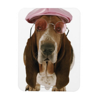 Basset hound in sunglasses and cap rectangular photo magnet