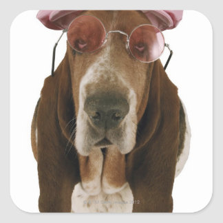 Basset hound in sunglasses and cap square sticker