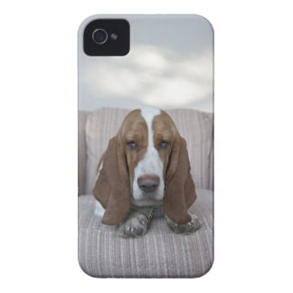 Basset Hound iPhone 4 Case-Mate Cases