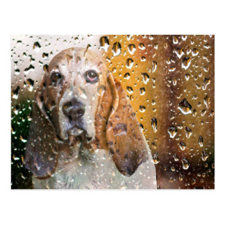 Basset Hound Miss You Postcard