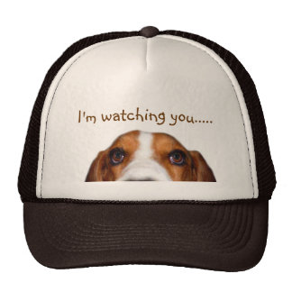 Basset Hound peeking in Cap
