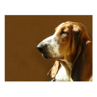 Basset Hound Photo Postcard