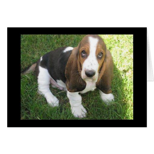 basset hound puppy dog blank note card