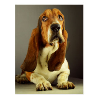 Basset Hound Puppy Dog Hello Love, Thinking of You Postcard