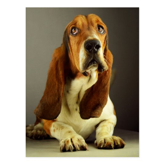 Basset Hound Puppy Dog Hello Love, Thinking of