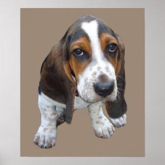 Basset Hound Puppy Print