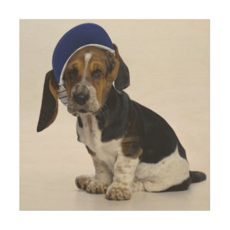 Basset Hound Puppy With Visor Wood Wall Art