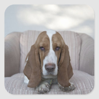 Basset Hound Square Sticker