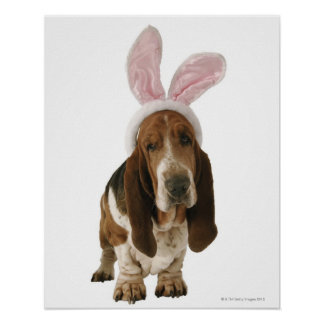 Basset hound with bunny ears print