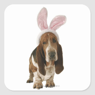 Basset hound with bunny ears square sticker