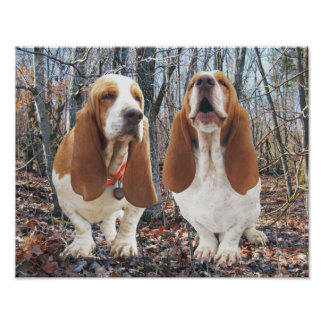 Basset Hounds in Woods Poster