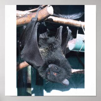 bat cape poster