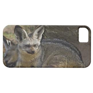 Bat-eared Fox, Otocyon megalotis, Masai Mara Case For The iPhone 5