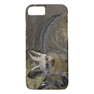 Bat-eared Fox, Otocyon megalotis, Masai Mara iPhone 8/7 Case