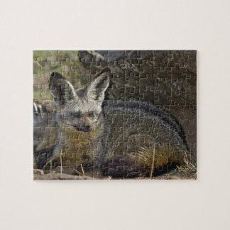Bat-eared Fox, Otocyon megalotis, Masai Mara Jigsaw Puzzle