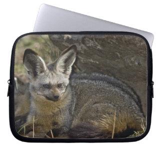 Bat-eared Fox, Otocyon megalotis, Masai Mara Laptop Sleeve