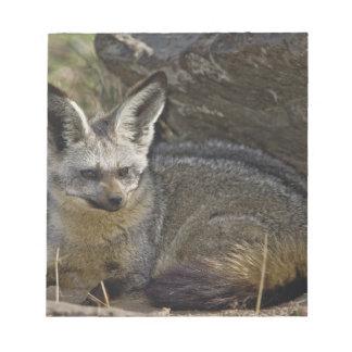 Bat-eared Fox, Otocyon megalotis, Masai Mara Notepad