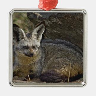 Bat-eared Fox, Otocyon megalotis, Masai Mara Silver-Colored Square Decoration