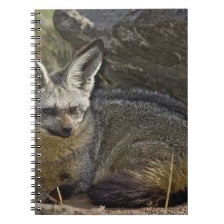Bat-eared Fox, Otocyon megalotis, Masai Mara Spiral Notebooks