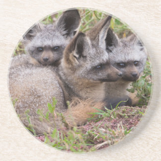 Bat-Eared Foxes, Serengeti National Park Coaster