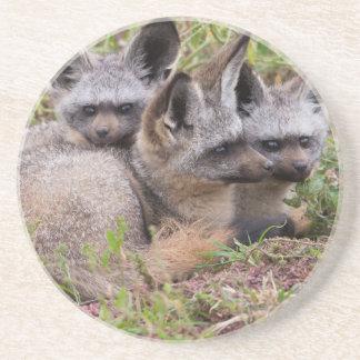 Bat-Eared Foxes, Serengeti National Park Drink Coaster