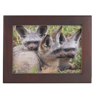 Bat-Eared Foxes, Serengeti National Park Keepsake Box