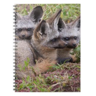 Bat-Eared Foxes, Serengeti National Park Note Book