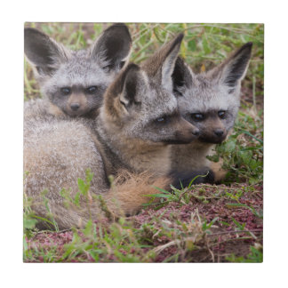 Bat-Eared Foxes, Serengeti National Park Small Square Tile