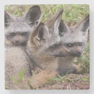 Bat-Eared Foxes, Serengeti National Park Stone Coaster