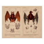Bat print fruit bat and long eared bat