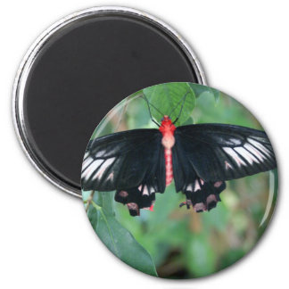 Bat Wing Butterfly 6 Cm Round Magnet
