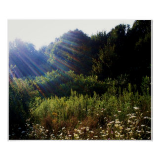 BATHED IN SUN RAYS poster