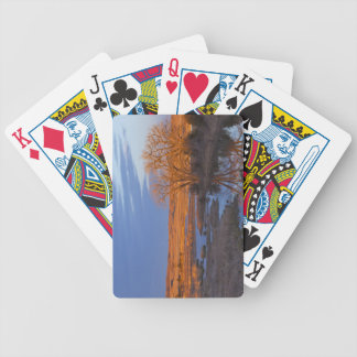 Bathed in sunset light the Calamus River Bicycle Playing Cards