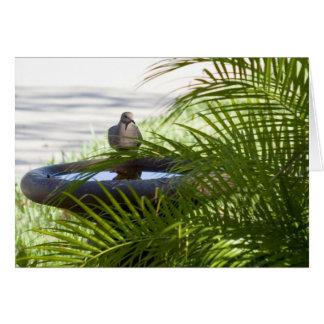 Bathing Bird Greeting Card