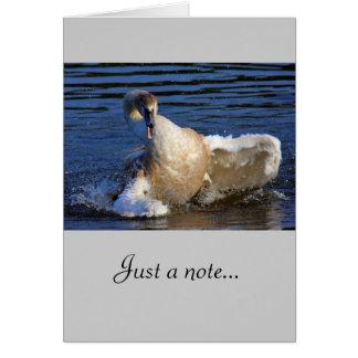 Bathing Cygnet Greeting Card