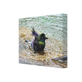 Bathing Time for the Starling #1 Gallery Wrapped Canvas