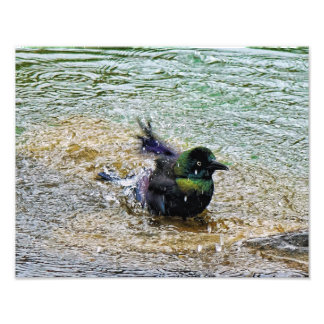 Bathing Time for the Starling Photographic Print