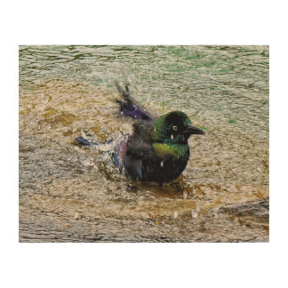 Bathing Time for the Starling Wood Prints