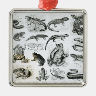 Batrachians and other Amphibia Silver-Colored Square Decoration