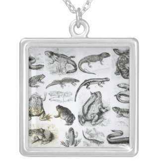 Batrachians and other Amphibia Silver Plated Necklace