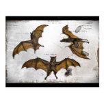 Bats an Educational Plate Post Card
