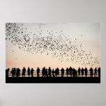 Bats of Austin - Austin, Texas Poster